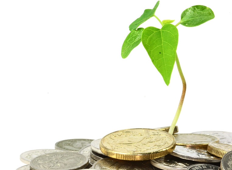 bigstock_money_tree_4524039