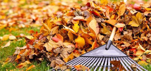 fall-raking-leaves